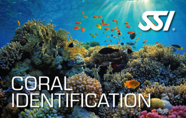 SSI Coral Identification Kurs