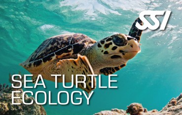 Gutschein SSI  Sea Turtle Ecology - abc-tauchparadies